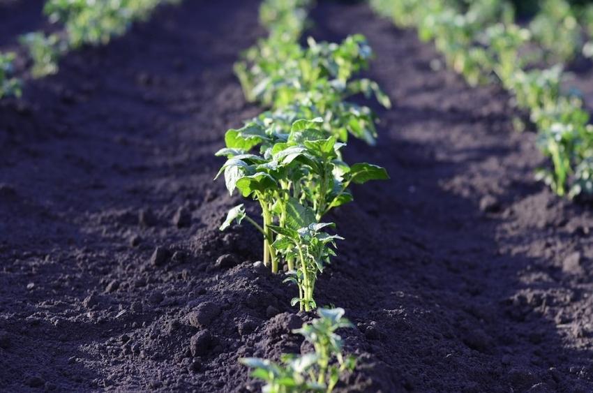 La agricultura ecológica a pequeña escala, única forma de erradicar el hambre en el mundo según la ONU